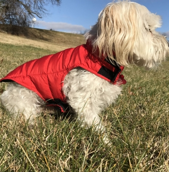 Reversible Winter Dog Coats - Keep Those Pups Warm