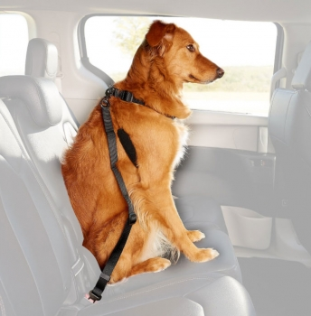 Dog Safety Seat Belt by Pet Wear